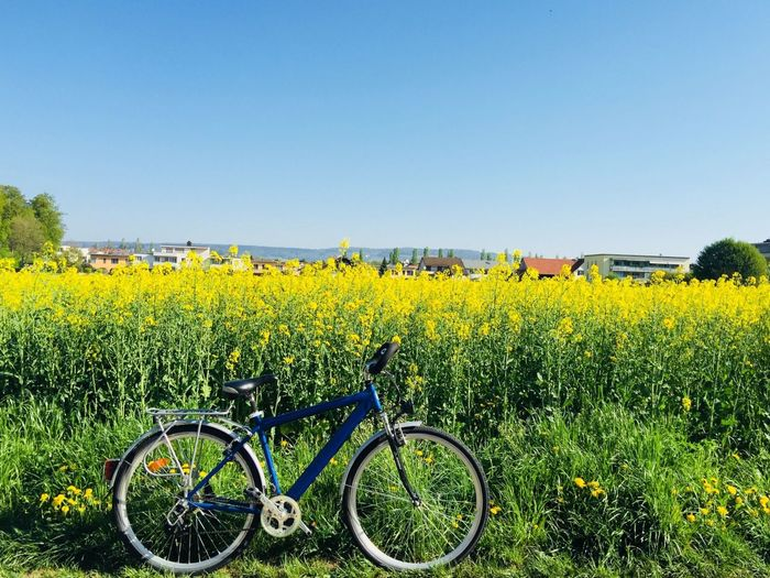 Bicycle Plant Sky Field Clear Sky Land Vehicle Growth Transportation Land Nature Mode Of Transportation Yellow Beauty In Nature Day No People Green Color Flower Flowering Plant Agriculture It's About The Journey