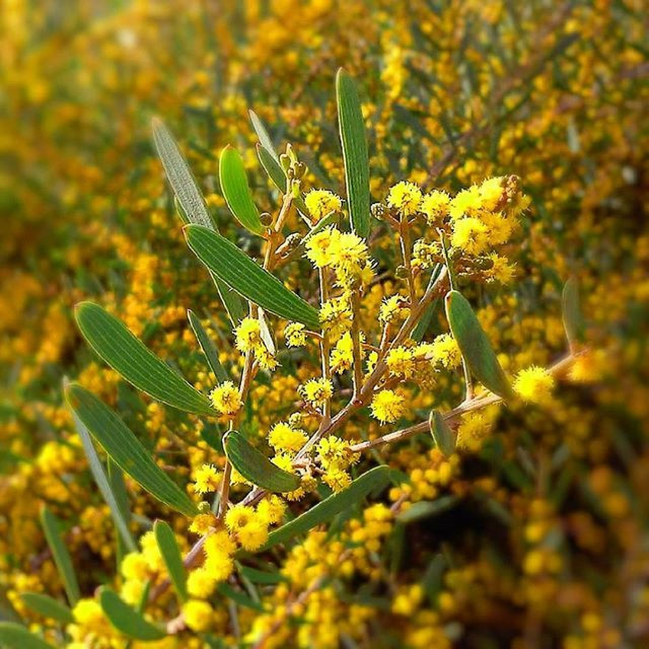 plant, nature, no people, growth, green color, close-up, day, outdoors, yellow, leaf, beauty in nature, animal themes