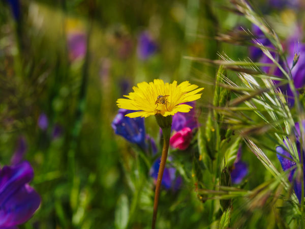 Wildflower Uncultivated Botany In Bloom Plant Life