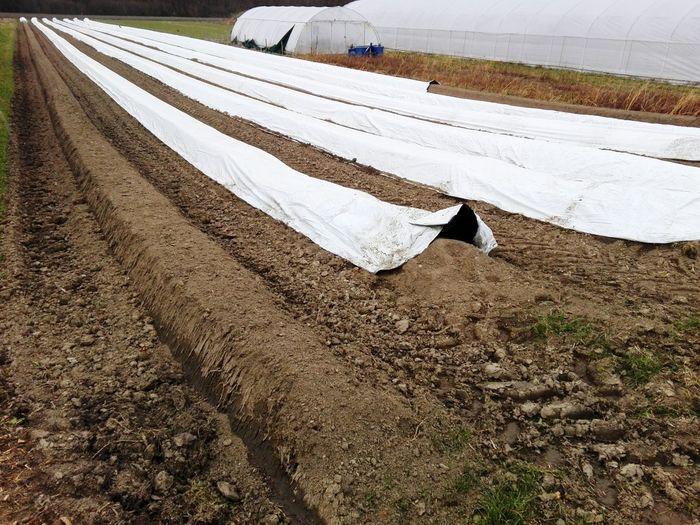 White umbrella on road amidst field