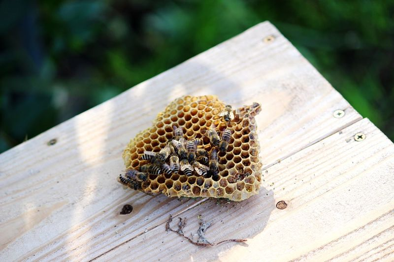 High angle view of bee on beehive over wooden table