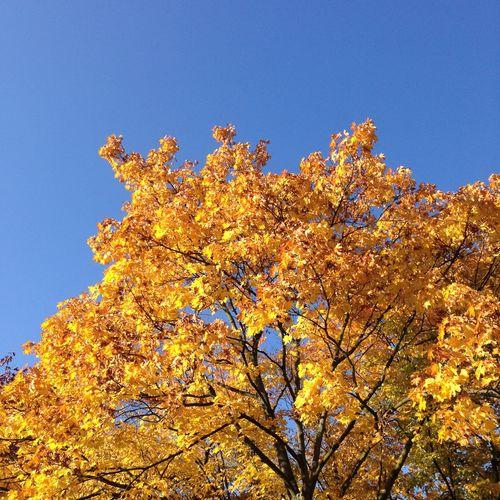 Herbst Autumn Autumn Colors Sky Skyporn Trees Dingenskirchen äh Baum? Planlos Was Kann Ich Taggen?