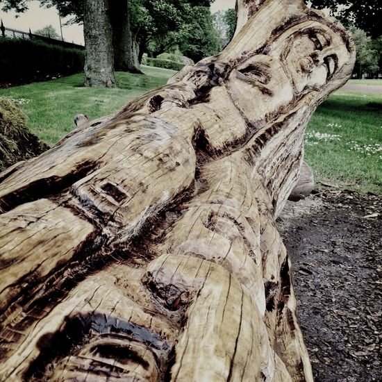 The Wooden Lady Tree Carving Woman Bark