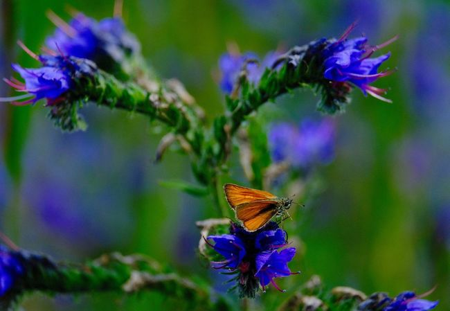 Butterfly - Insect Butterfly Collection Flower Flowering Plant Insect Plant Invertebrate Beauty In Nature Animal Themes Animals In The Wild Close-up Flower Head Fragility Pollination