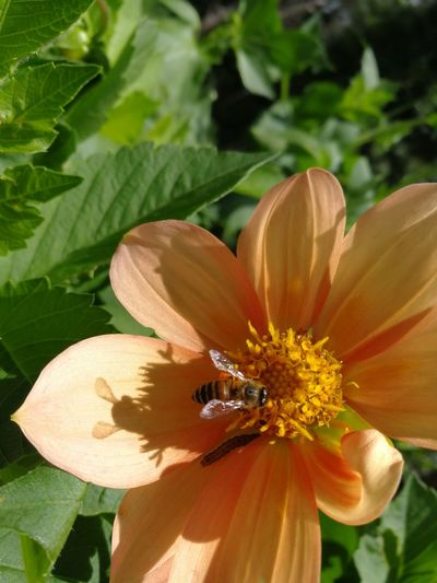 Flower Head Flower Bee Perching Insect Petal Leaf Close-up Animal Themes Plant