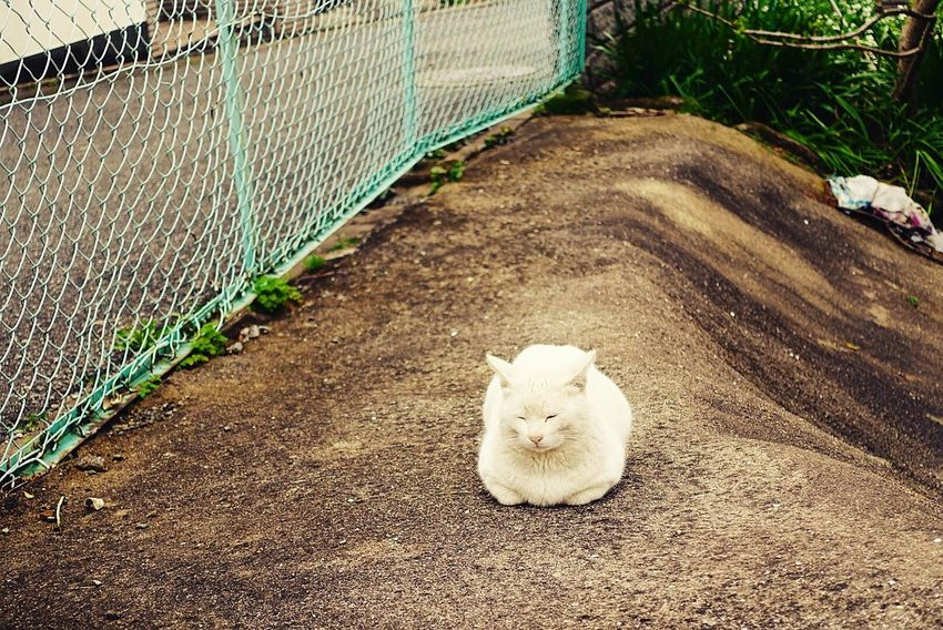 Animal Themes High Angle View No People Nature Pets Day Outdoors Cat♡ Hello World Cats のらねこ部 野良猫 猫 ねこ Cat Cute Photography One Animal Animal Animals In The Wild White Zzz ZzZzZz もち もちっ