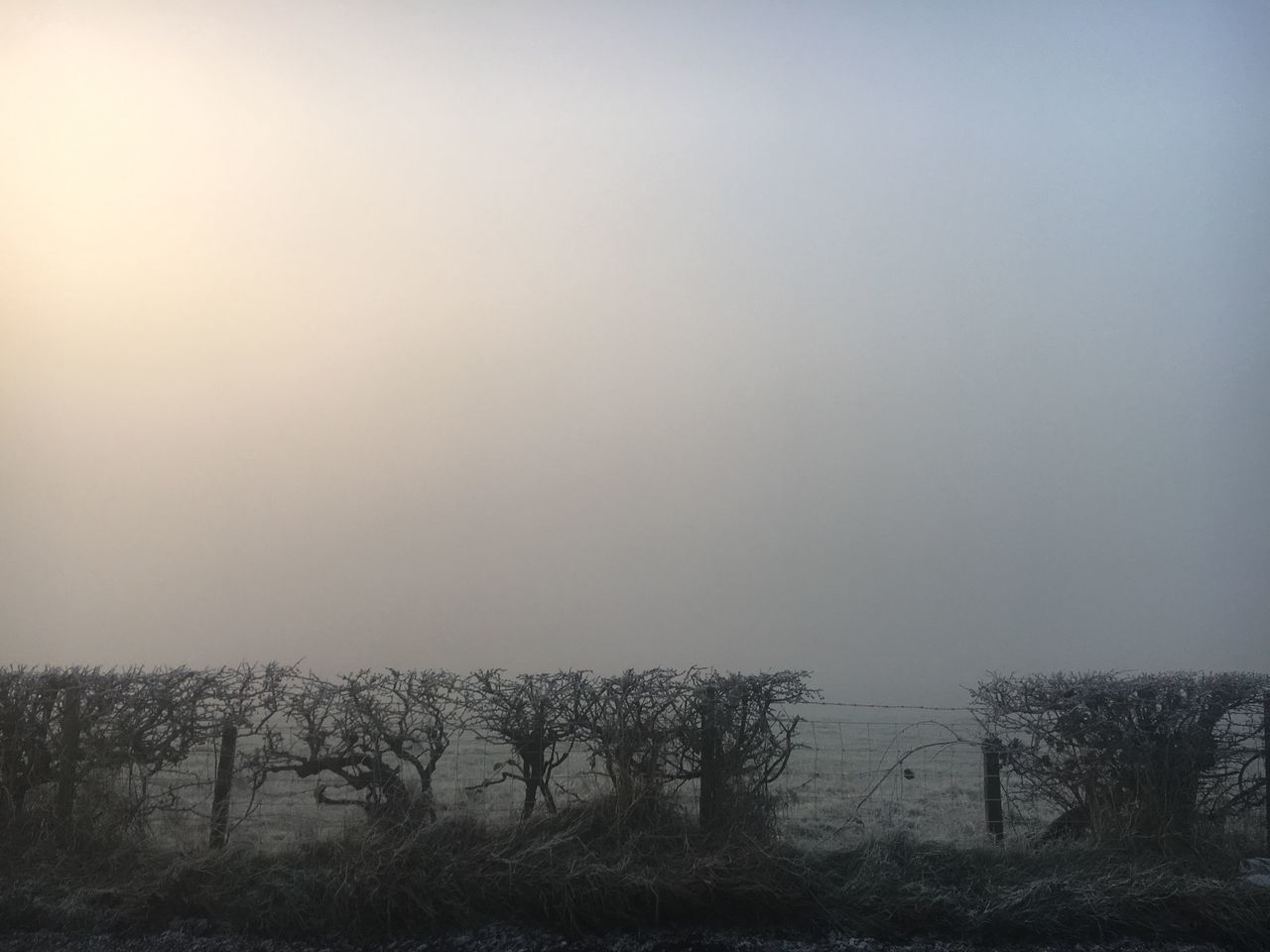 tranquility, landscape, nature, tranquil scene, beauty in nature, field, fog, scenics, outdoors, no people, tree, mist, day, hazy, winter, sky, grass, cold temperature