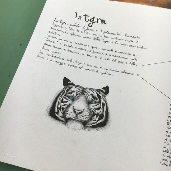 Tiger Drawing ✏ Chiaroscuro  Disegno Progress Progetto School ✌ Penna Lovedrawing Animal Liceoartistico