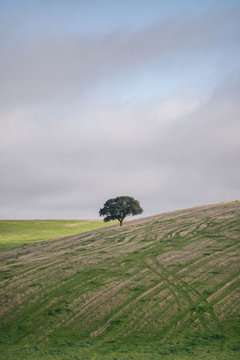 Portugal Holm Oak Cork Cork Tree Scenics - Nature Nature Plant Cloud - Sky Environment Landscape Non-urban Scene Outdoors Beauty In Nature Land Field Day Grass Alone Quiet Tranquility Alentejo Isolated