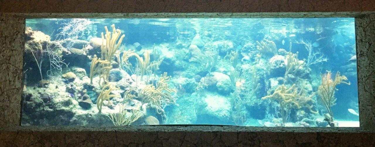 Mexico Aquarium Fish Sea Life Tank Blue Light And Shadow Summer Views Xcaret