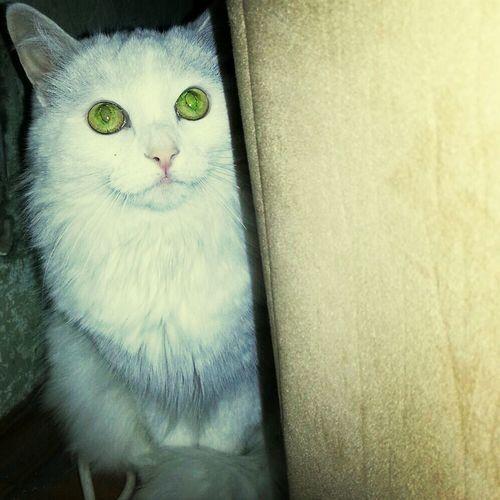 Kat White Kat kazan