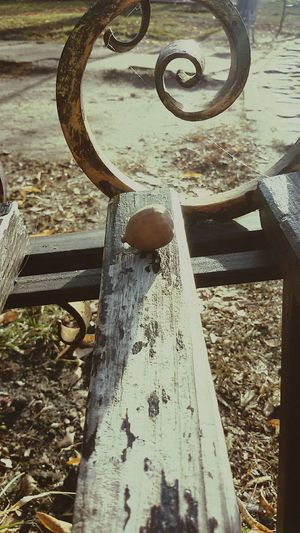 Outdoors No People Day Iron - Metal Close-up Bench Bench Seat Acorn Acorn On Bench Nature Photography Walking Around Taking Pictures Walking Around скамейка Metal Art Woodenbench Industrial Nature Nature And Technology