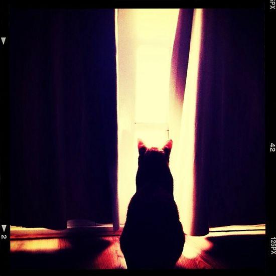 ? Cat Cat♡ Silhueta Luz