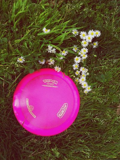 Disc Golf Chick Disc Golfing Innova Fresbee Golf