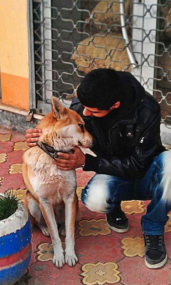 kısa zamanda büyük dostluk kurduğum paşa asil köpek