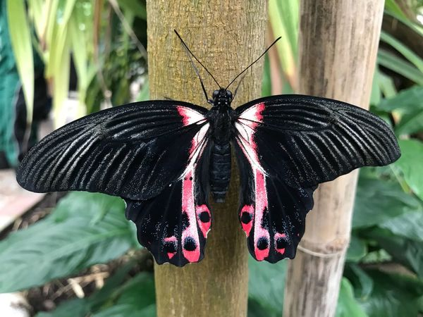 EyeEm Selects Insect Butterfly - Insect Animals In The Wild Animal Themes One Animal Day