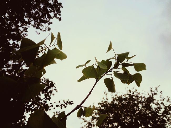 Leaf Growth Low Angle View Plant Sunbeam