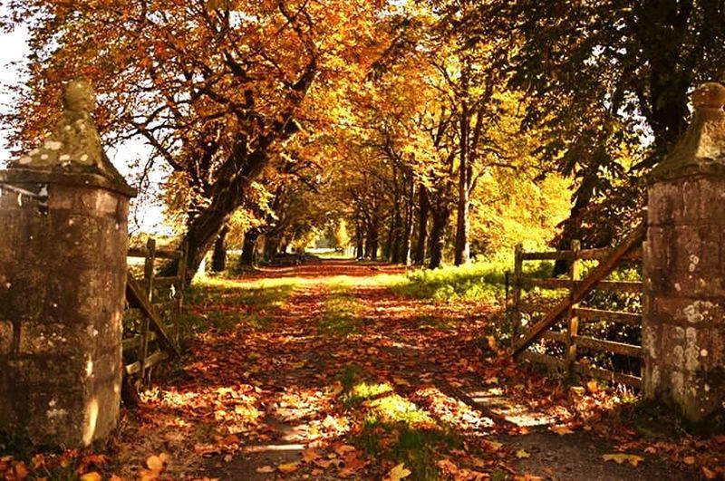 Oldgate Autumn🍁🍁🍁 Autumn Colors Autumn Leaves Autumn 2015 Autumn Trees Road Champêtre Road Of An Old Castle