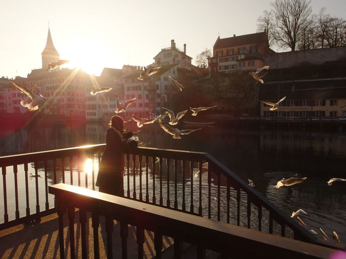 Sunset People Water Sky River Bellevue Zürich Animal Lake Swan City Life Light Outdoors Day Travel Sunset Bridge - Man Made Structure River Large Group Of People People Outdoors Water Human Body Part Sky Adult