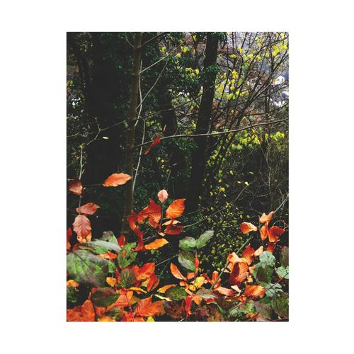 Leaf Plant Plant Part Autumn Transfer Print Nature Growth No People Day Auto Post Production Filter Tree Beauty In Nature Change Outdoors Leaves Tranquility Orange Color Close-up Grass Sunlight