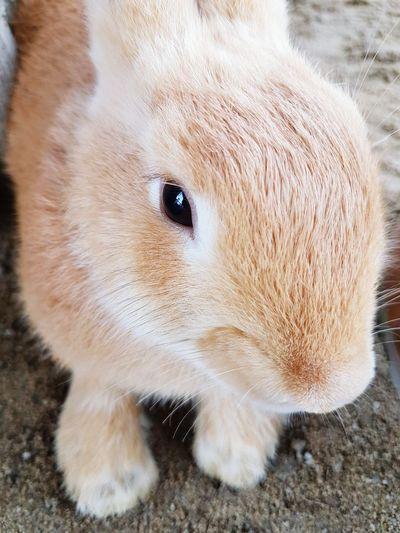 One Animal Animal Themes Close-up Animal Head  Pets Outdoors Rabbit Rabbits Rabbit ❤️ Rabbits 🐇 Rabbit 🐇 Rabbitsofinstagram Rabbit - Animal Rabbit♡ Rabbit Face Rabbit Portrait Rabbitstagram Rabbit Eye Rabbit Faces Pet Portraits