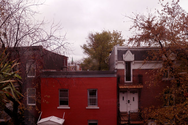 Photos taken in and around Montreal, fall of 2018. Montréal City Urban Streetphotography Tree Architecture Building Exterior Built Structure Building Sky Residential District No People Day Window House Bare Tree Outdoors Cloud - Sky Branch Red Old