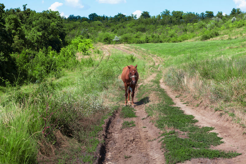 View of a horse on dirt road