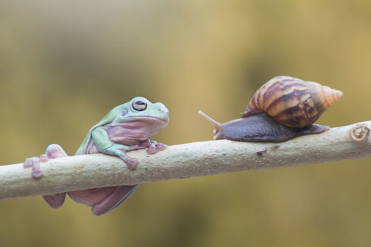 tree frog and mantis Animal Themes Animal Animal Wildlife Vertebrate Focus On Foreground Animals In The Wild Close-up One Animal No People Nature Day Branch Outdoors Reptile Shell Snail Zoology Mollusk