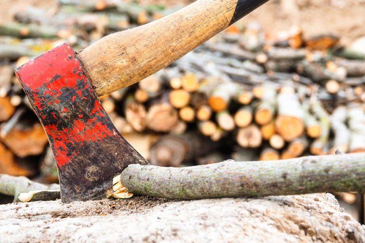 Close-up of rusty tree stump