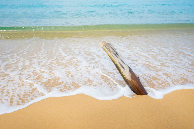 View of drift wood on beach