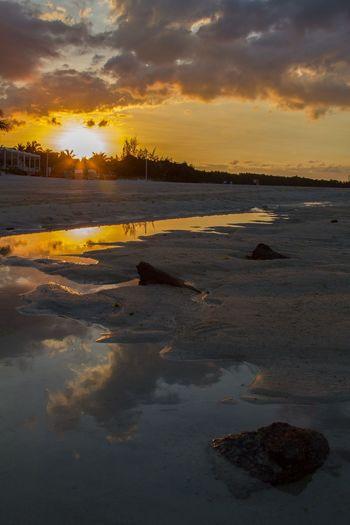 Mauritius belle
