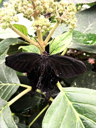 Butterfly Insect Leaf Animals In The Wild Animal Themes One Animal Animal Wildlife Wildlife Close-up Day Butterfly - Insect Nature No People Outdoors Plant Green Color Full Length Fragility Beauty In Nature Freshness
