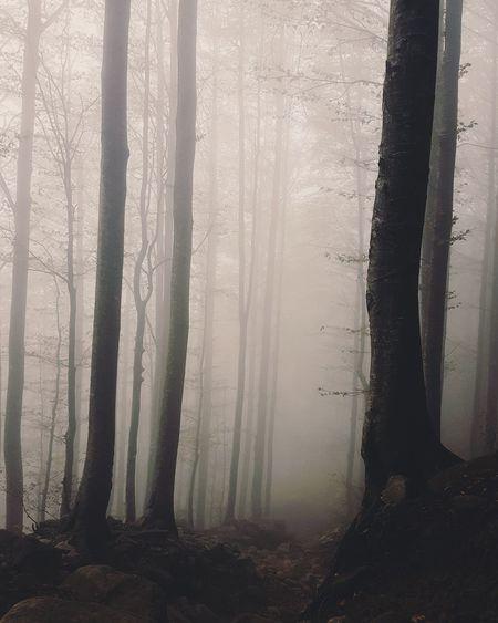 #Nature  #trees #inverno #autunno #autumn #colorsofnature #appennino #strangetree #Alberi #Mountains #Winter #fog #foggy #foggymountains #trees #light #landscape Day