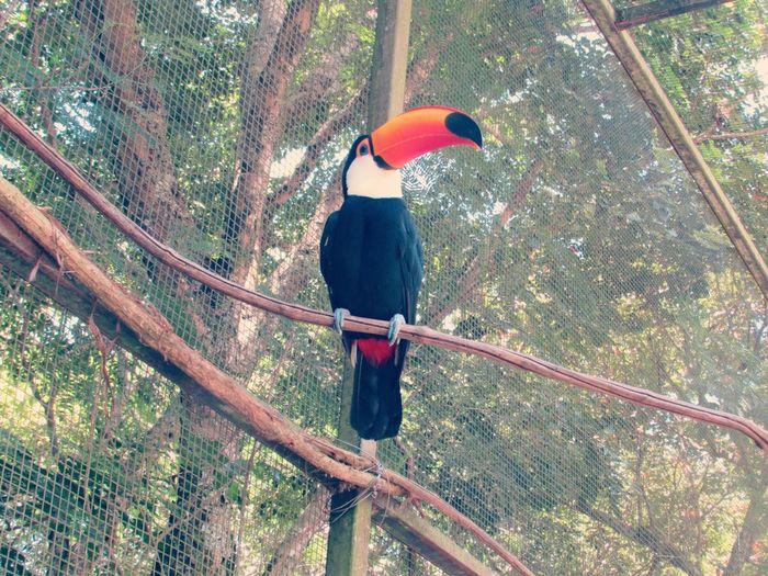 Animal Photography Animals Aves Naturephotography Nature's Diversities