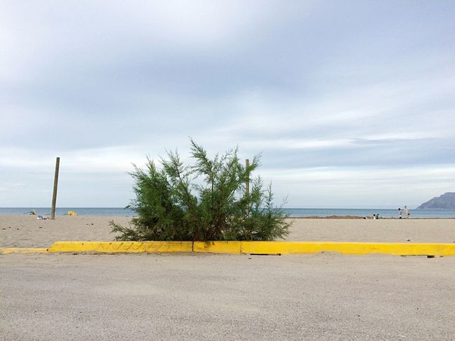 Mallorca Beach street curb bush Emptiness desolation green yellow grey low season off-peak
