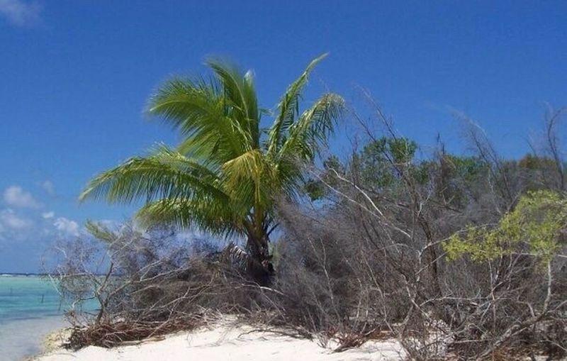 Piti'o Kaukura Tuamotu Islands French Polynesia White Sand Beaches Sea Sun And Blue Sky The Week On EyeEm Breathing Space