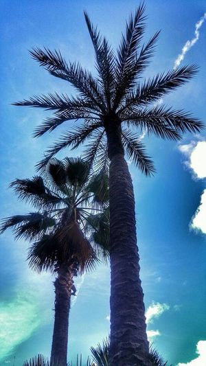 Palm Tree Tree Summertime Natural World Spanish Coastline North Of Spain Nature_collection Nature Photography Skylovers