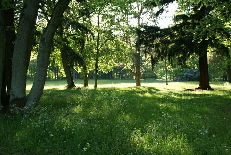 Tree Nature Green Color Beauty In Nature Grass Outdoors Plants And Flowers
