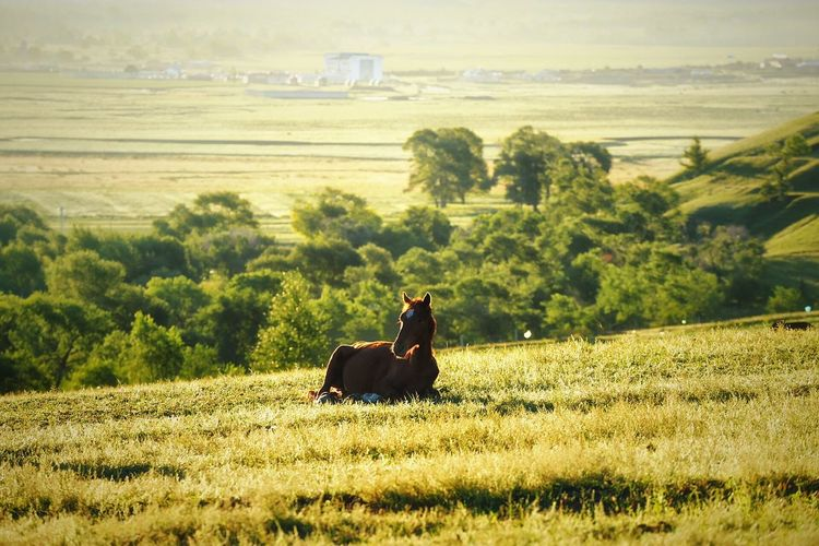 Horse relaxing on grassy field