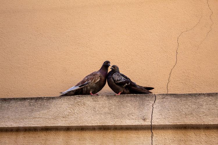 Birds perching on wall