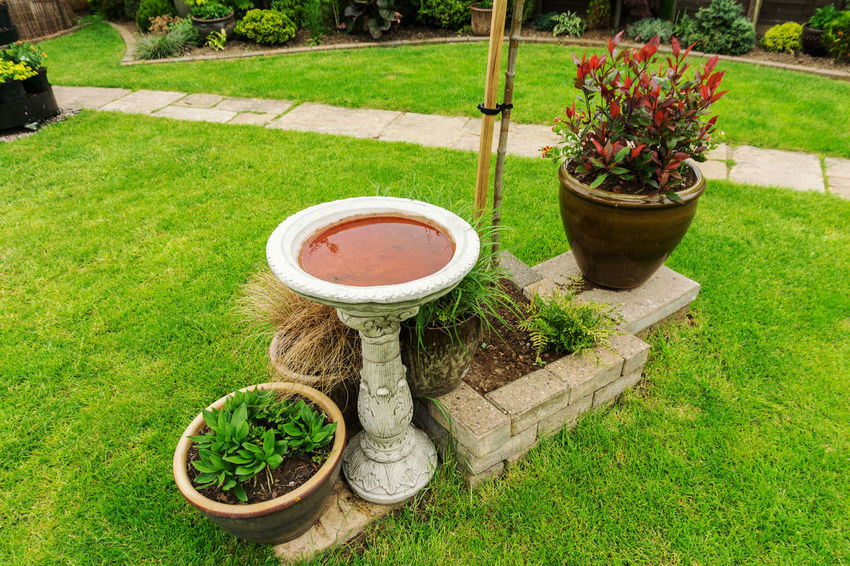 Local gardens pots plants sheds plus barbecues Bird Bath Borders Bricks Daytime Flowers,Plants & Garden Grass Green Leaves Lilac Flower Local Gardens Pots Plants Sheds Plus Barbecues Outdoors Photograpghy  Pathways Pink Flowers Plants Red Flower Shrubs Summertime 🌞 Trees White Flowers Yellow Flowers