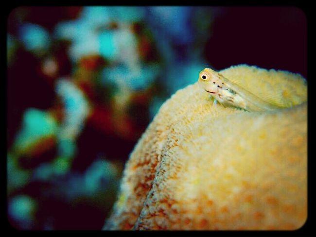 Under Water Scuba Diving Fish