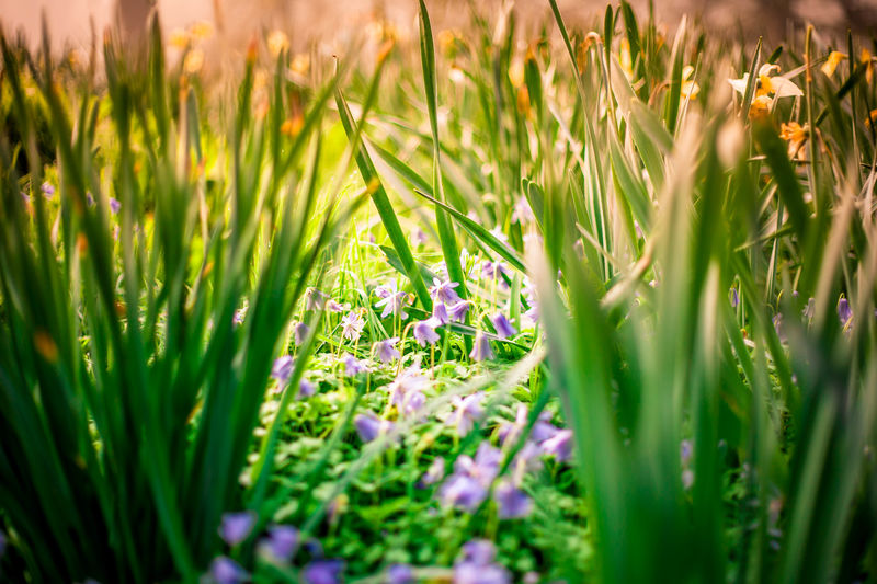 Flower Nature Plant Beauty In Nature Growth Field Grass Outdoors Wildflower Uncultivated Fragility Close-up No People Day Rural Scene Flowerbed Freshness Flower Head Ireland🍀 Doneraile EyeEm Selects