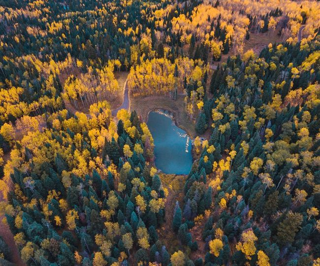Aerial View Of Lake Amidst Trees During Autumn