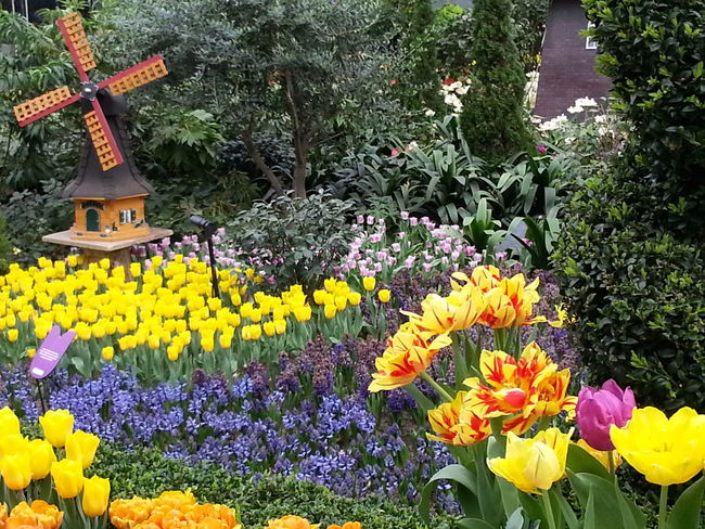Tulips @ Garden by the bay. Singapore Travel Tourism Tour Traveling