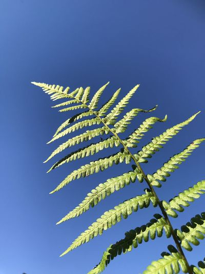 Low angle view of fern against blue sky
