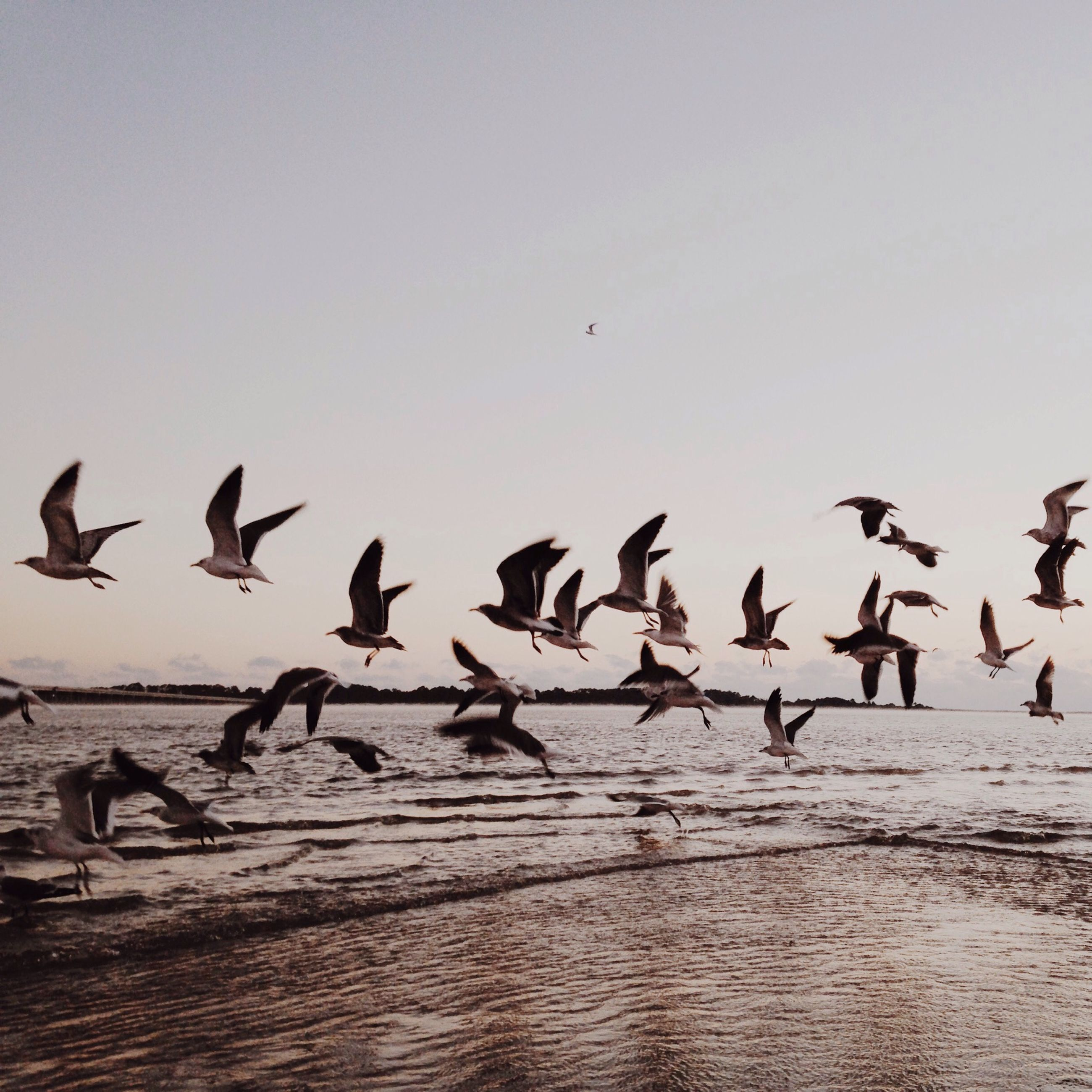 bird, animal themes, animals in the wild, wildlife, flock of birds, flying, medium group of animals, spread wings, nature, sky, vertebrate, togetherness, zoology, seagull, outdoors, beauty in nature, water, mid-air, no people