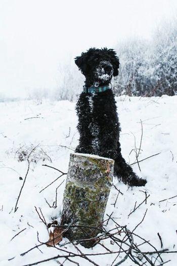 AnimaLs <3 Cheese! Dog Dog Love Chapa I Love My Pet My Dog <3 Hi!