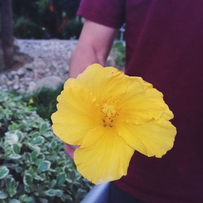 He gave me a beautiful hibiscus Thankyoulove Flower Hibiscus Sunset Mylove Alwayshandedflowers Lovely
