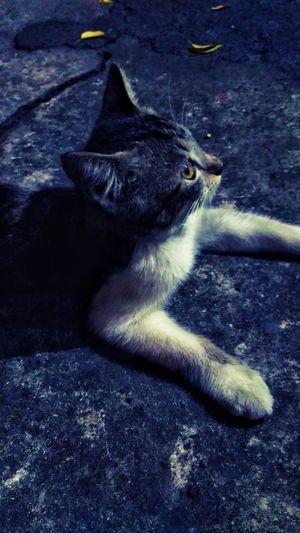 Pets UnderSea